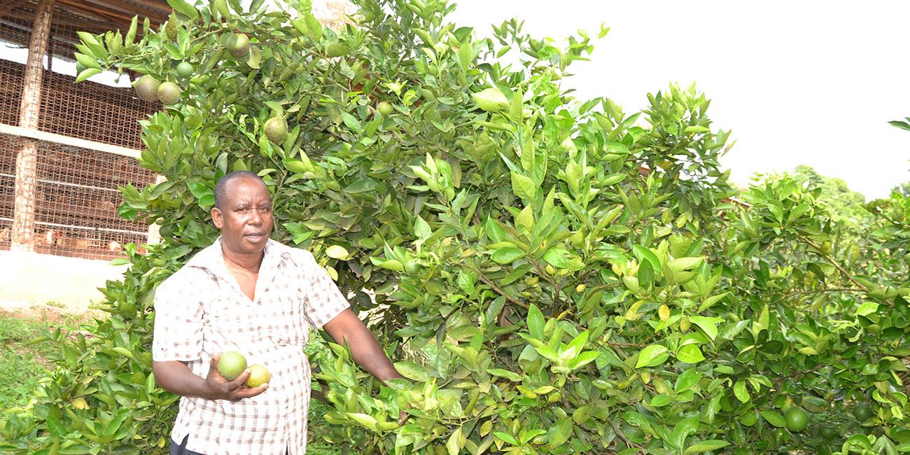 Oranges in Uganda
