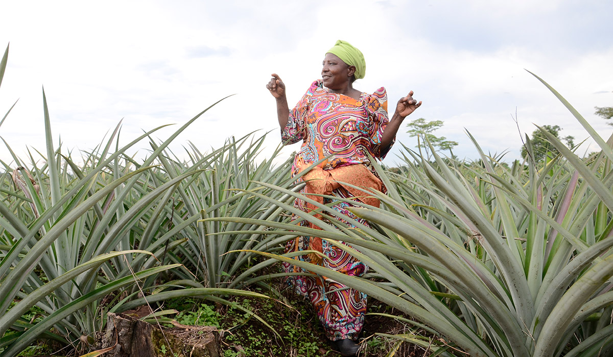 57 year old housewife turns into a pineapple commercial farmer