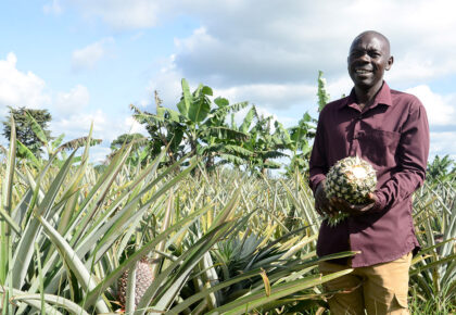 From 200,000 pineapple suckers from NAADS, Luwero farmer owns 100 acres