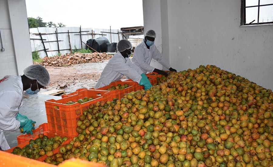 Yumbe Mango Processing Factory to be commissioned in December 2020