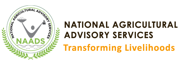 National Agricultural Advisory Services-Agriculture in Uganda