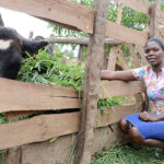 2 Heifers from NAADS Transform Women's group in Lira