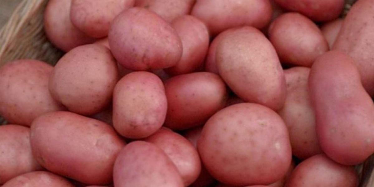 Irish Potatoes