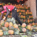 Government through NAADS to set up Fruit Processing Facility in Greater Masaka Region