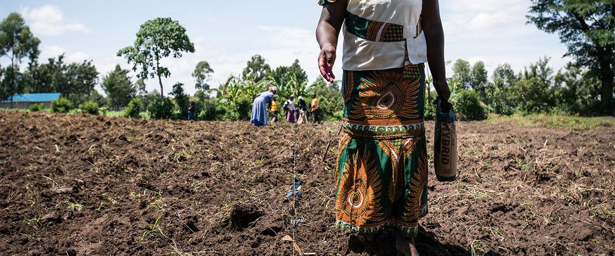 Planting Maize
