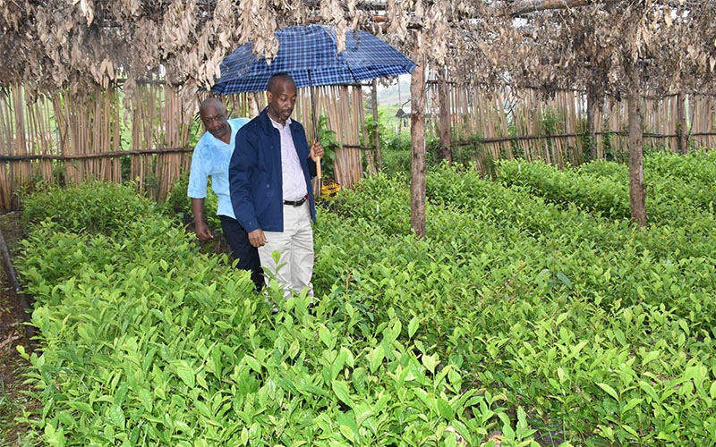 Distribution of tea seedlings under Government Strategic Interventions