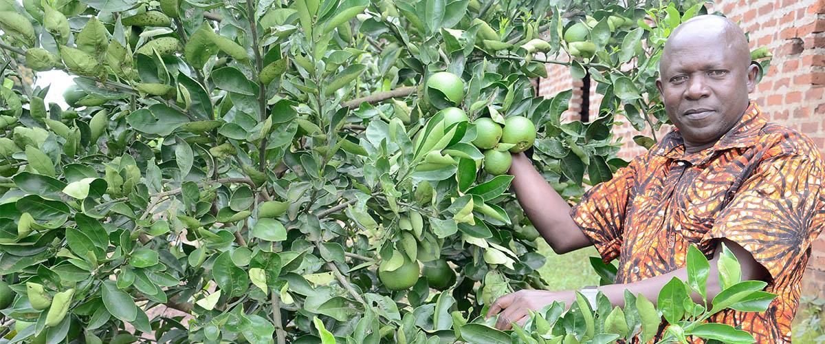 Traing & Pruning