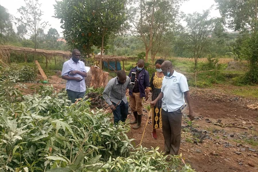Verification exercise for Planting materials begins ahead of Planting season
